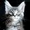 Thumbnail: 673 Beckham  Maine Coon male kitten