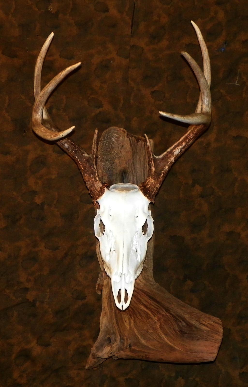 Mysite | Skull, Horn & Antler Mounts