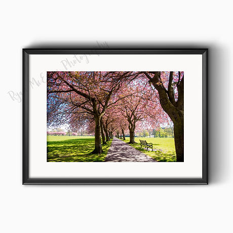 Edinburgh Meadows 16 x 12 unframed print