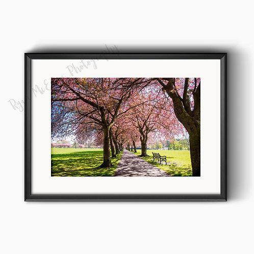 Edinburgh Meadows Blossom