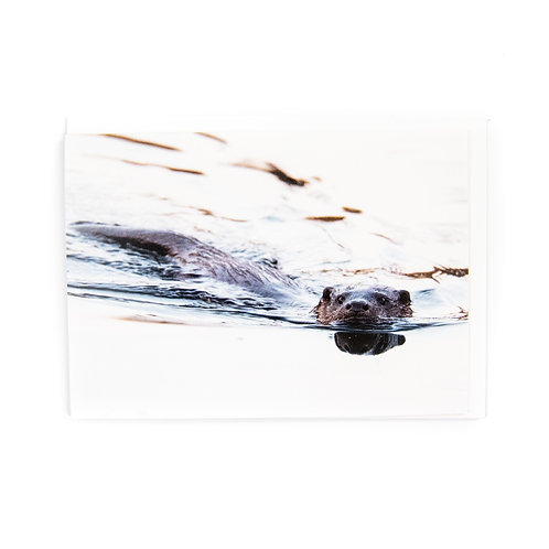 Edinburgh Otter Card by Ryan McEwan Photography