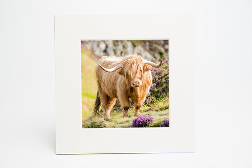 Highland Cow Square Mounted Print