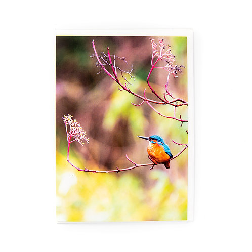 Kingfisher Edinburgh Card by Ryan McEwan Photography