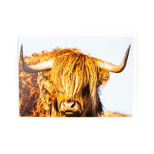 Highland Cow Card by Ryan McEwan Photography
