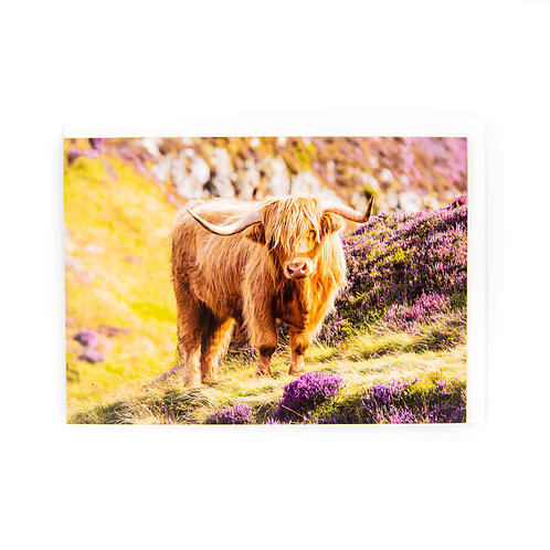 Highland Cow Edinburgh Card by Ryan McEwan Photography