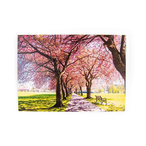 The Meadows Blossom Card Edinburgh by Ryan McEwan Photography