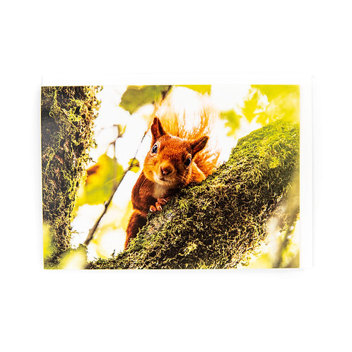 Red Squirrel Card by Ryan McEwan Photography