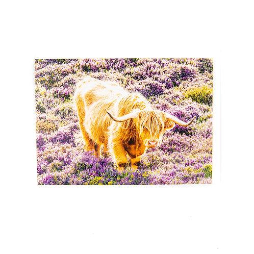 Highland Cow in Heather Scotland Card by Ryan McEwan Photography