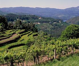 Vineyards, Soajo region, near Lima river