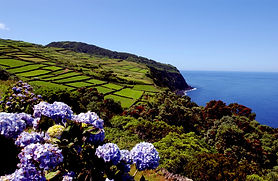 Hortensias, Terceira, Azores, Portugal.j