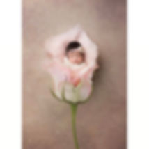 Newborn baby posed in a rose