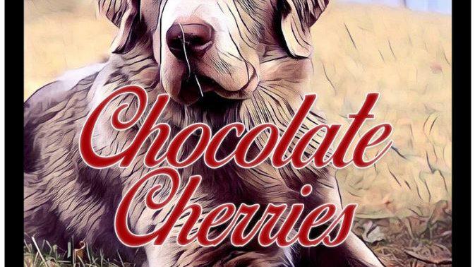 Chocolate Cherries 12oz