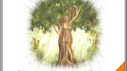 65 Discovering Your Soul Group Family at the Tree of Life – Archangel Michael