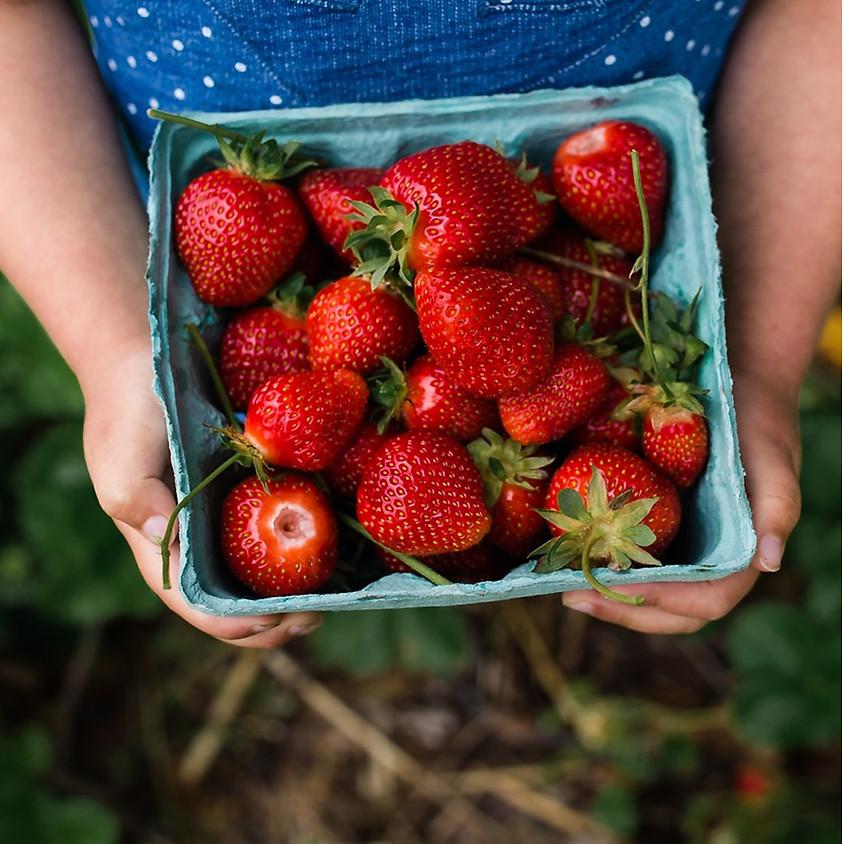 Strawberry Picking! (Grades 3-5)
