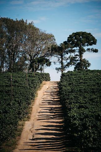 FazendaPinheiroLandscapes21.jpg
