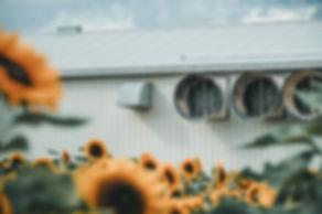 Sunnflower-9070499.jpg
