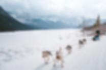 Banff_Winter_Dog_Sledding_Rockies_3315-2