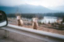 Banff-7059.jpg
