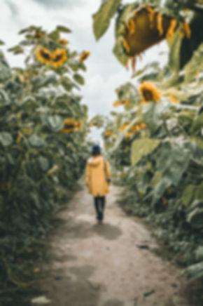 Sunnflower-8662.jpg
