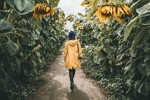 Sunnflower-8687.jpg