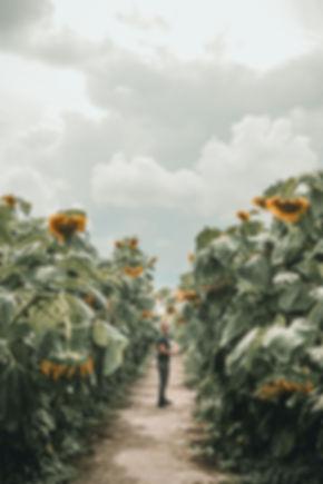 Sunnflower-9070355.jpg