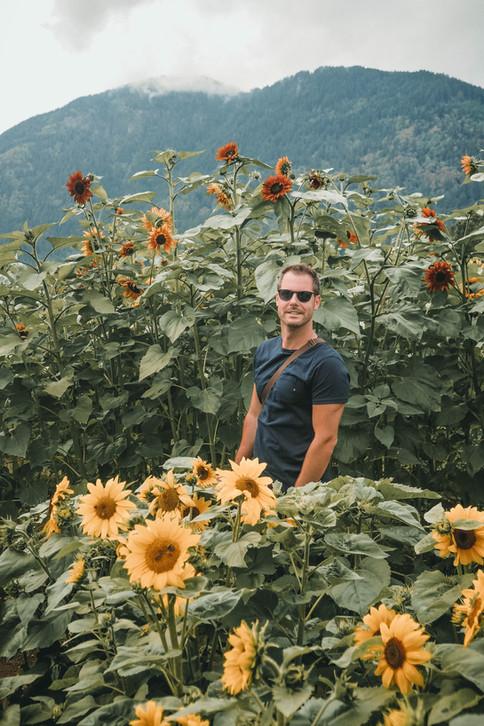 Sunnflower-9070326.jpg