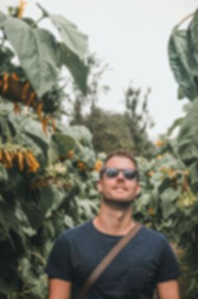 Sunnflower-9070362.jpg
