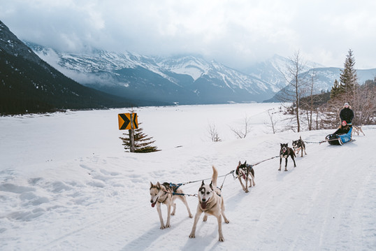Banff_Winter_Dog_Sledding_Rockies_3315.j