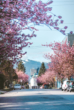 Cherry_Blossom_Photography_Guide_Vancouv