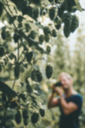 Sunnflower-9070510.jpg