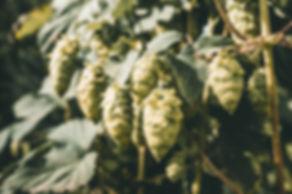 Sunnflower-8813.jpg