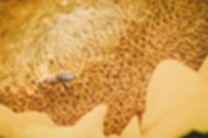Sunnflower-9070294.jpg