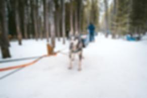 Banff_Winter_Dog_Sledding_Rockies_6925.j