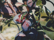 Grappe de prunes