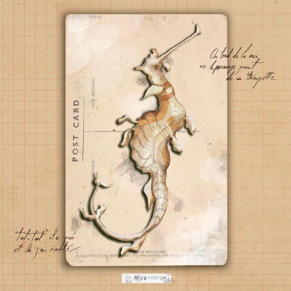 a seahorse.jpg