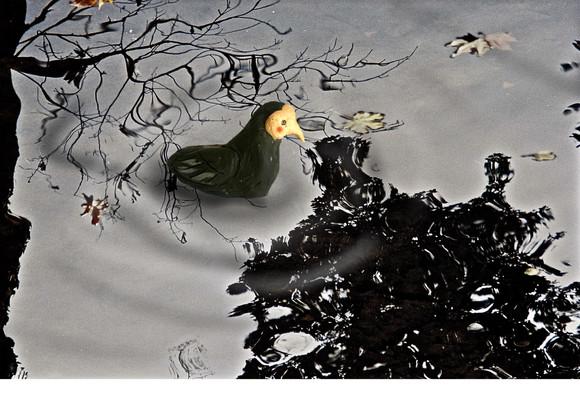 """Detail from the short """"Mr. Bird Watcher"""""""