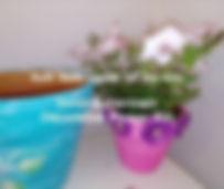 Mothersday_edited.jpg