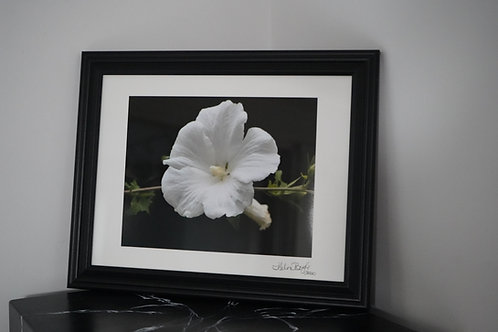 Rose of Sharon by Helen Boyle