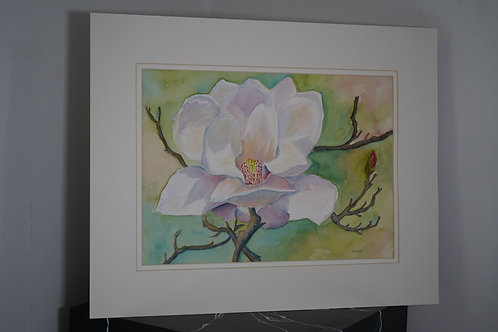 Magnolia Watercolor by Donald Beal
