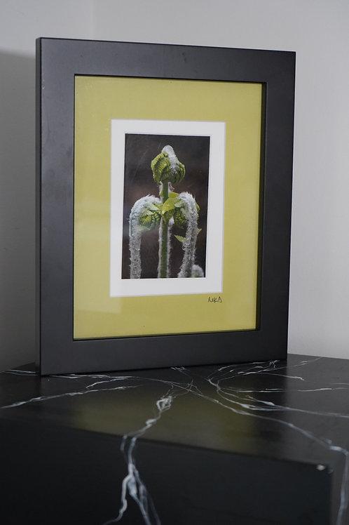 Fiddlehead Ferns by Mara DeWitte