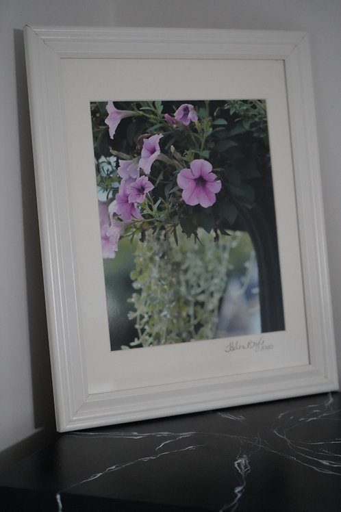 Petunia in Urn by Helen Boyle