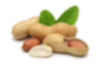 Peanut-Free-PNG-Image.png