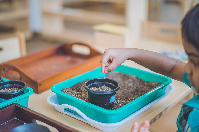 A child planting seeds in an international school.