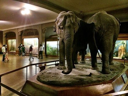 Hall of Asian Mammal.jpeg