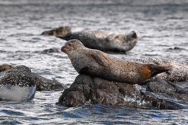Seals.jpeg