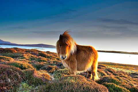 cute horse.jpg