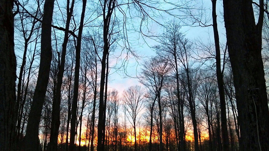 sunrisewoods.jpg