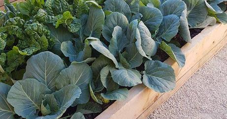 Veggie Garden NZ.jpg