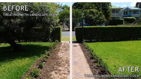 Introducing LANDSCAPE LOCK - 'Hairspray' for mulch!