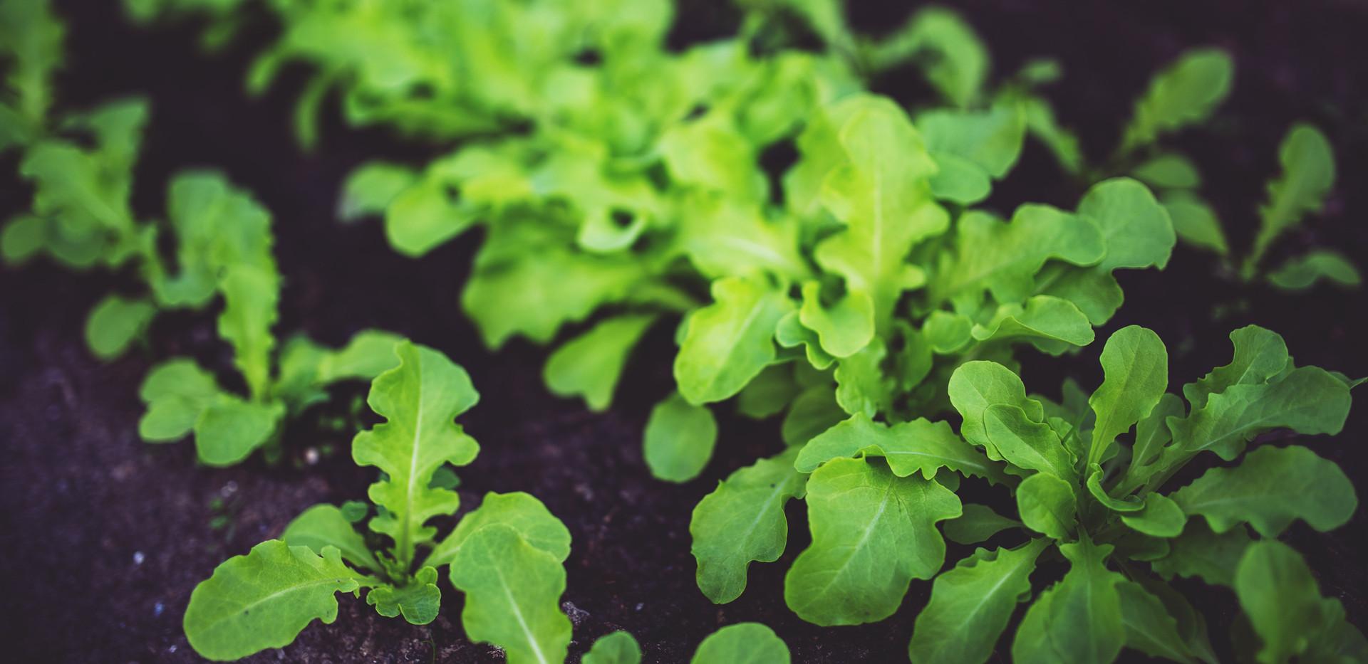 Omega Compost.jpg